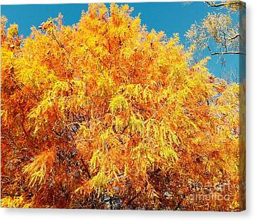 Golden Cypress  Canvas Print