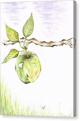 Golden Delishous Apple Canvas Print