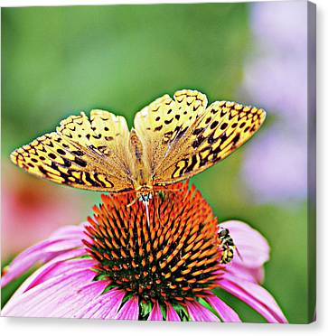 Golden  Canvas Print by Don Wright