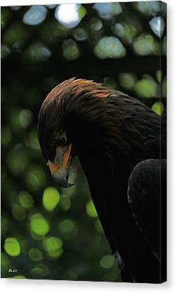 Golden Eagle Canvas Print by Mary Masters