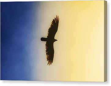 Golden Eagle Over Friday Harbor Canvas Print by Juli Ellen