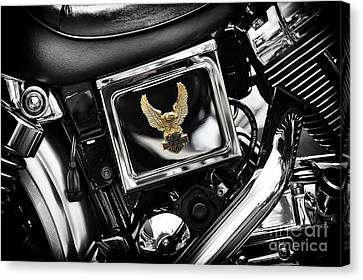 Golden Eagle Canvas Print by Tim Gainey