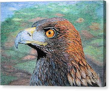Golden Eagle Canvas Print by Yvonne Johnstone
