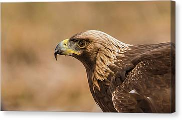 Golden Eagle's Portrait Canvas Print by Torbjorn Swenelius