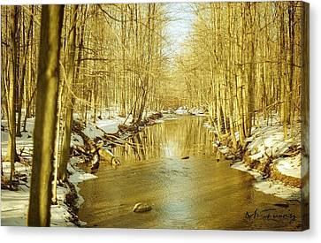 Canvas Print featuring the photograph Golden Early Spring In Ontario by Maciek Froncisz