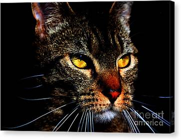 Golden Eyes Canvas Print by Nick Gustafson