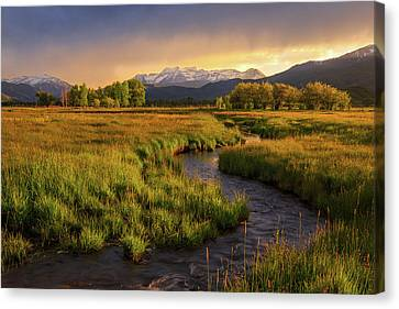 Golden Field In Heber Valley. Canvas Print by Johnny Adolphson