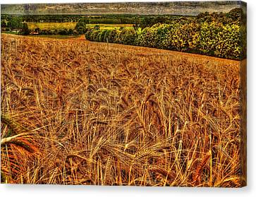 Golden Field In Normandy Canvas Print by Karo Evans