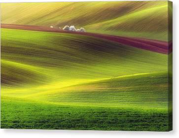 Golden Fields Canvas Print by Piotr Krol (bax)