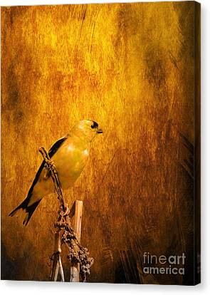 Golden Finch Canvas Print by Wingsdomain Art and Photography