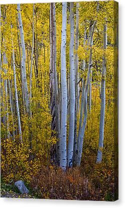 Golden Forest Portrait Canvas Print by James BO  Insogna