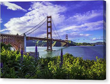 Golden Gate Of Spring Canvas Print by Phil Fitzgerald