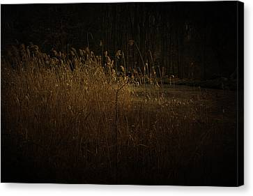 Canvas Print featuring the photograph Golden Grass by Ryan Photography