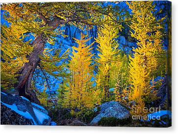 Golden Grove Canvas Print by Inge Johnsson