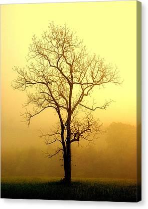 Golden Haze Canvas Print by Marty Koch