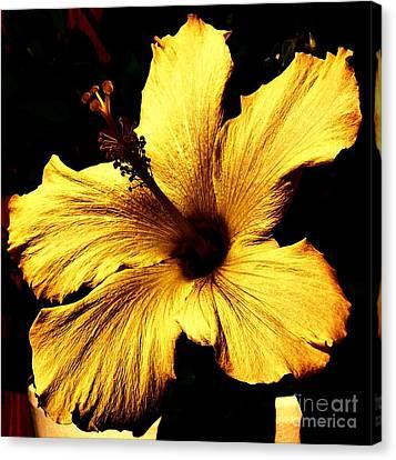 Golden Hibiscus Canvas Print by Marsha Heiken