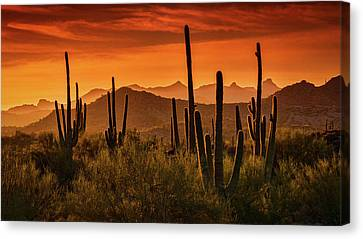 Golden Hills At Sunset  Canvas Print