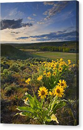 Golden Hills Canvas Print by Mike  Dawson
