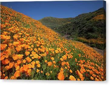 Canvas Print featuring the photograph Golden Hillsides by Cliff Wassmann
