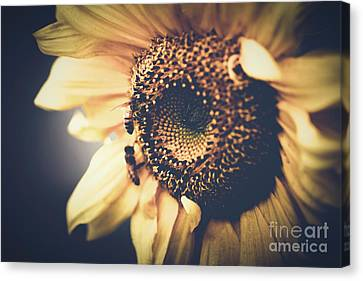 Golden Honey Bees And Sunflower Canvas Print