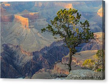 Canvas Print featuring the photograph Golden Hour At Pima Point by Beverly Parks