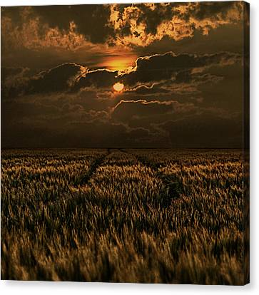 Cornfield Canvas Print - Golden Hour by Joachim G Pinkawa