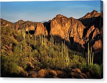 Canvas Print featuring the photograph Golden Hour On Saguaro Hill  by Saija Lehtonen