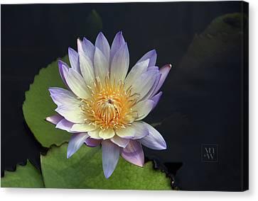 Golden Hue Canvas Print