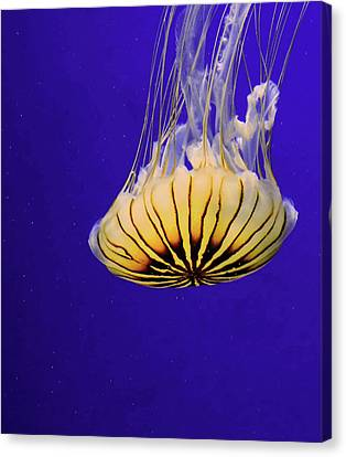 Golden Jellyfish Canvas Print by Rosalie Scanlon