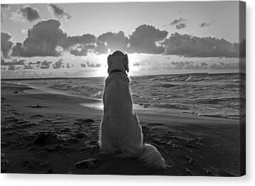 Golden Labrador Watching Sunset Canvas Print by Sumit Mehndiratta