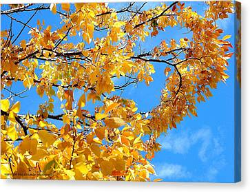 Golden Leaves Ll Canvas Print