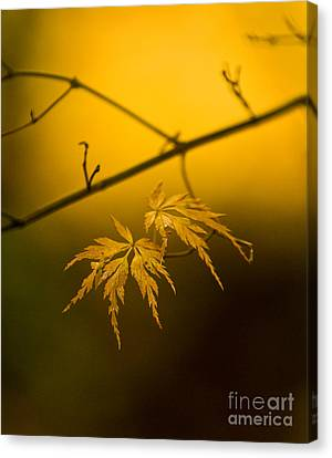 Golden Leaves Canvas Print by Mike Reid