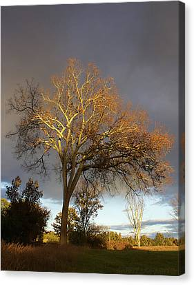 Golden Light Canvas Print by Jerry LoFaro