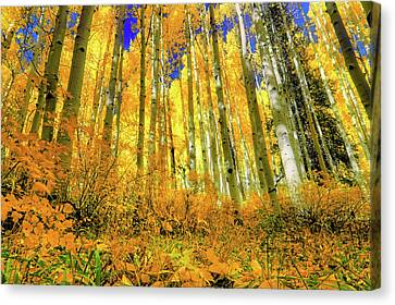 Canvas Print featuring the photograph Golden Light Of The Aspens - Colorful Colorado - Aspen Trees by Jason Politte