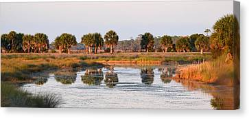 Golden Light On The St. Marks Marshes Canvas Print