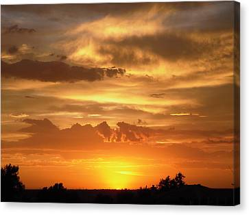 Golden Light Canvas Print by Stephanie Moore