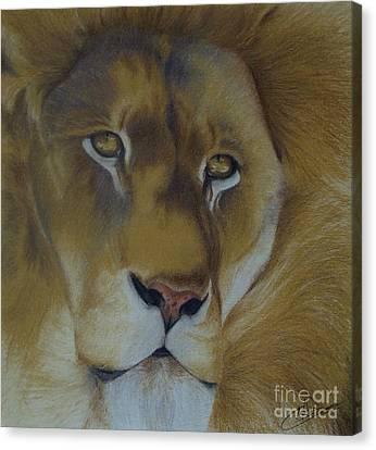 Golden Lion Canvas Print by Amy Hodgkinson