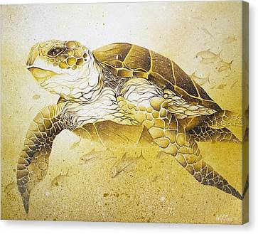 Golden Loggerhead Canvas Print by William Love