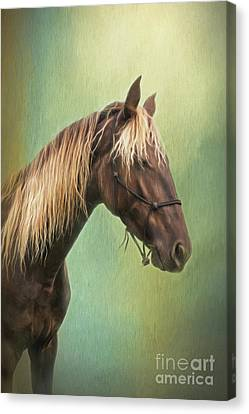 Bay Horse Canvas Print - Golden Mane by Sharon McConnell