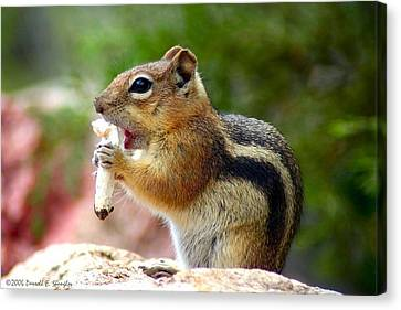 Canvas Print featuring the photograph Golden-mantled Ground Squirrel by Perspective Imagery