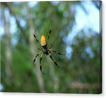 Golden Orb Weaver 1 Canvas Print