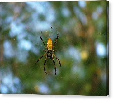 Golden Orb Weaver 2 Canvas Print