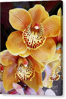Golden Pink Orchid Canvas Print - Golden Orchid by Kaye Menner