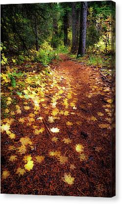 Canvas Print featuring the photograph Golden Path by Cat Connor