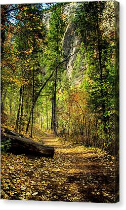 Golden Path Of Shadows Canvas Print