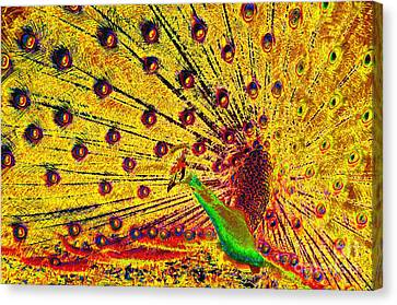 Golden Peacock Canvas Print by David Lee Thompson