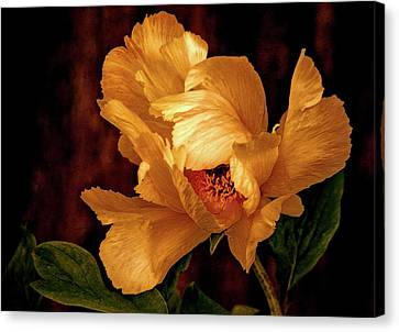 Canvas Print featuring the photograph Golden Peony by Julie Palencia