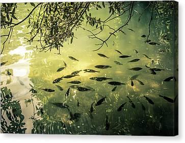 Golden Pond With Fish Canvas Print by Menachem Ganon
