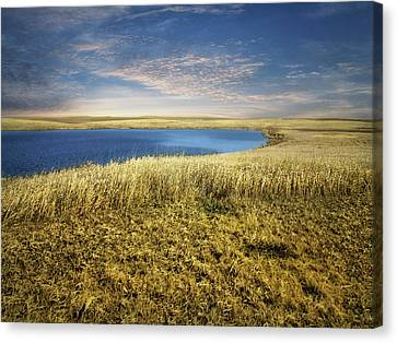 Golden Prairie Canvas Print