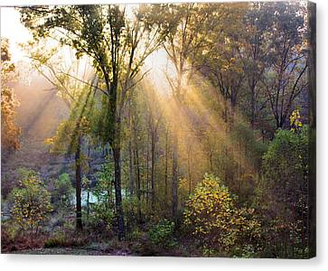 Golden Rays Canvas Print by Kristin Elmquist